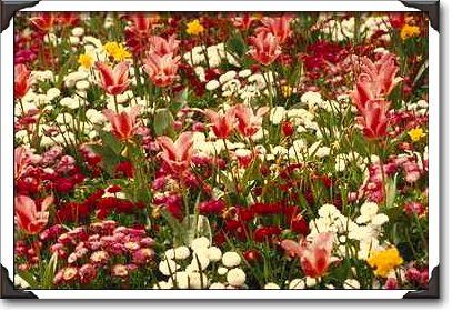 Spring flowers in edwards gardens toronto ontario ont photo spring flowers in edwards gardens toronto mightylinksfo